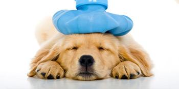 huisdieren-verzekering